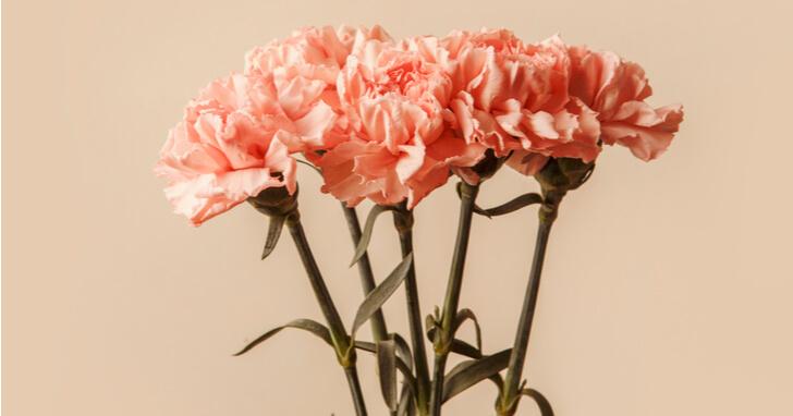 日頃の感謝を込めて花をプレゼント